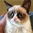 :grumpy-cat:
